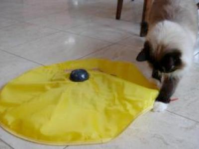 Best-Feline-Interactive-Toys