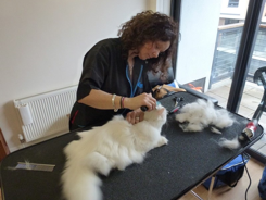 Cat groomer London