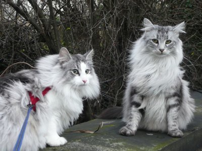 CAT HARNESS TRAINING