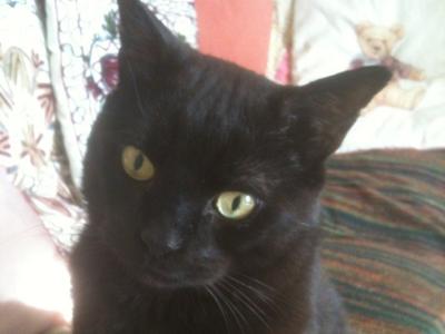 Cat-Grooming-Camden-Moro
