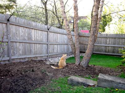 Cat-Proof-Fencing