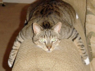 Cat-behaviourist-feedback-for-Maggie