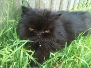 Cat-behaviourist-feedback-for-Noodles
