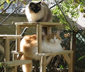 Hand-made-cat-climbing-towers