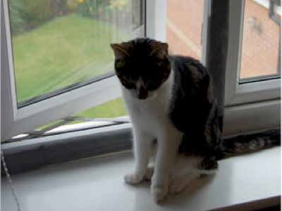 How-to-cat-proof-your-windows