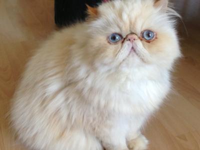 London-cat-behaviourist-indoor-cats