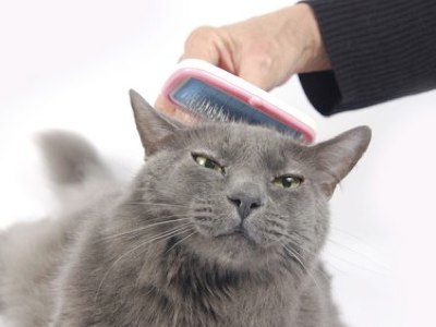 London-mobile-cat-groomer-the-correct-grooming-equipment