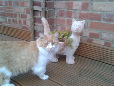 Mobile-cat-grooming-Enfield-Gali