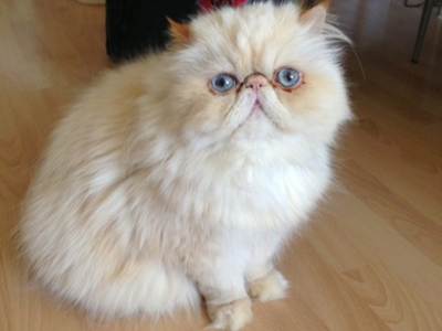 Mobile-cat-grooming-Harrow-Cannelle-and-Boston