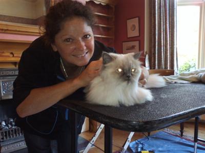 Mobile-cat grooming-Hertfordshire-Star