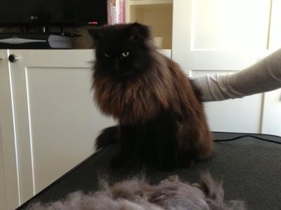 Mobile-cat-grooming-Lambeth-Paddington