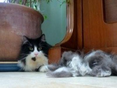 Mobile-cat-grooming-Twickenham-Oliver