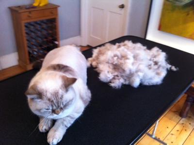 Mobile-cat-grooming-WC1-Esme