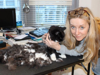 Persian cat grooming london