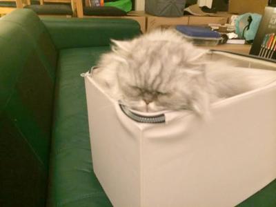 Mobile-cat-grooming-feedback-Watson