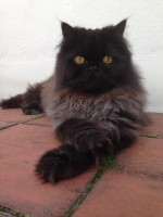 holland-park-cat-sitter