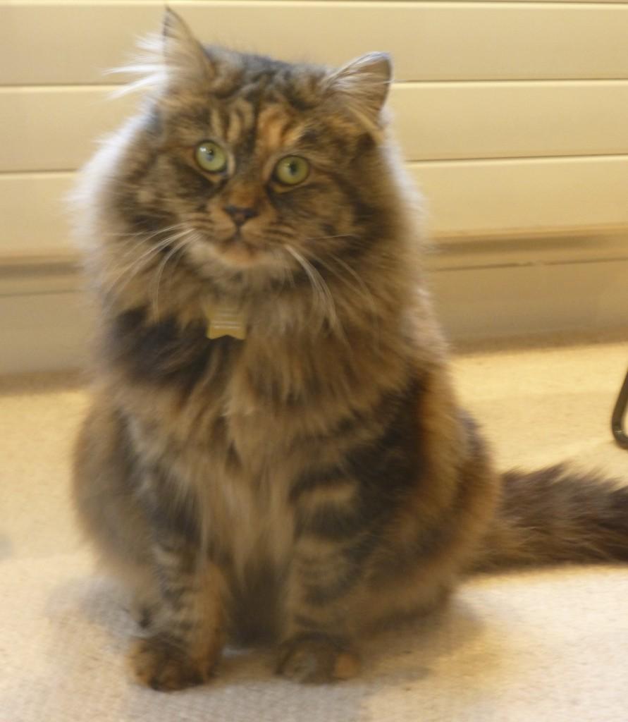 cat sitter Ladbroke Grove