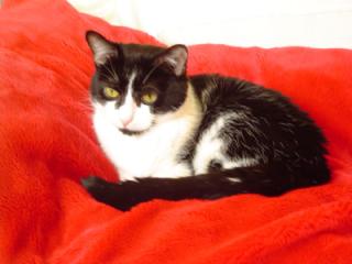 ladbroke-grove-cat-sitters