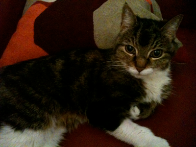cat sitting london notting hill W11