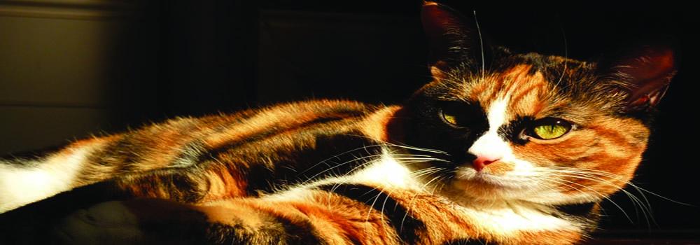 vet-referred-cat-behaviour-practice