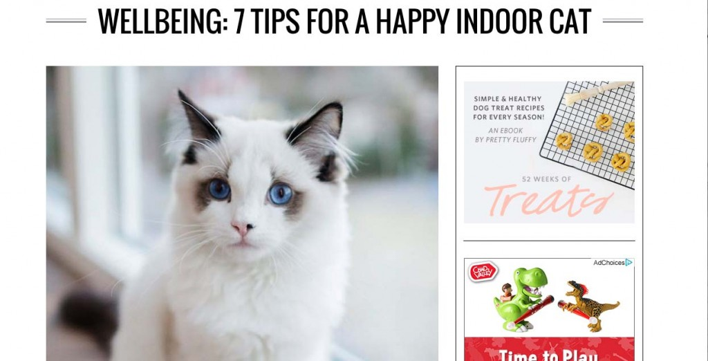 7 tips for a happy indoor cat
