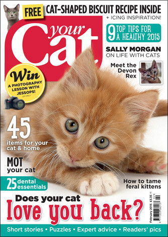 cat behaviour articles