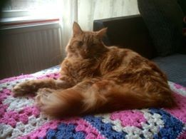 professional cat groomer