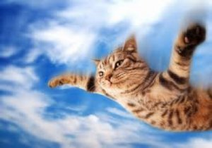 sedating cats for airline travel Successful flight with a cat begins long before the day of travel it requires planning and preparation in order to make the experience as enjoyable as possible for.