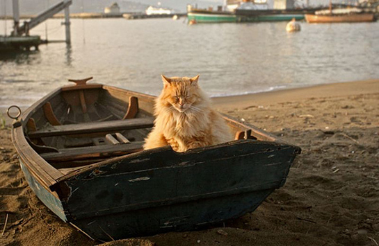 travelling with a cat in a boat