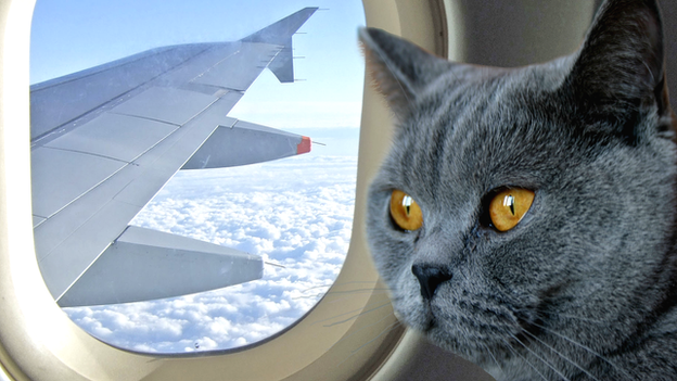 getting on a plane with a cat