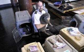 Cats in airline cargo