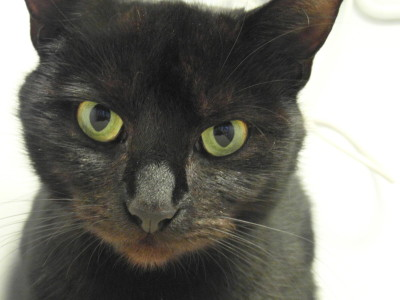 Debbie - Awaiting her forever home at The Mayhew