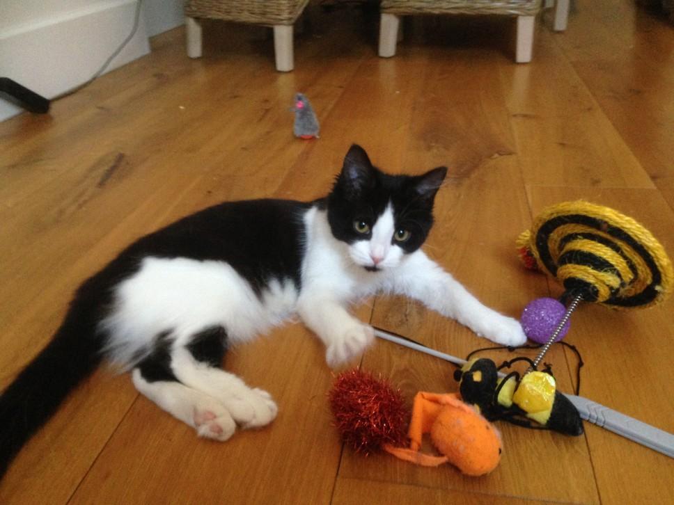 kitten sitting Ladbroke Grove