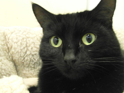 Wanda - waiting for a home at The Mayhew