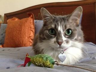 cat-pic-catnips