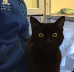 Emmeline - Currently seeking a home - The Mayhew