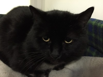 Linus - Currently looking for a home - The Mayhew