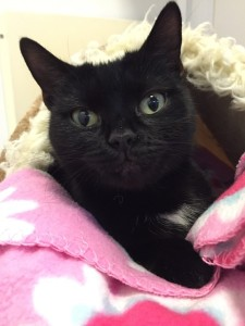 Shadow - currently looking for a home - The Mayhew