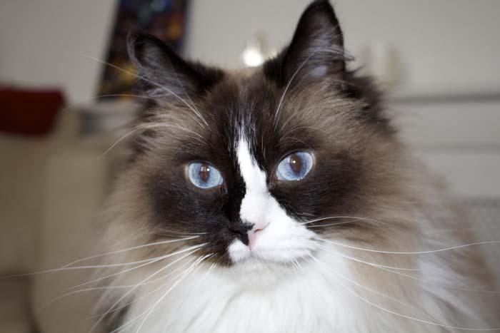 Cat sitting Notting Hill