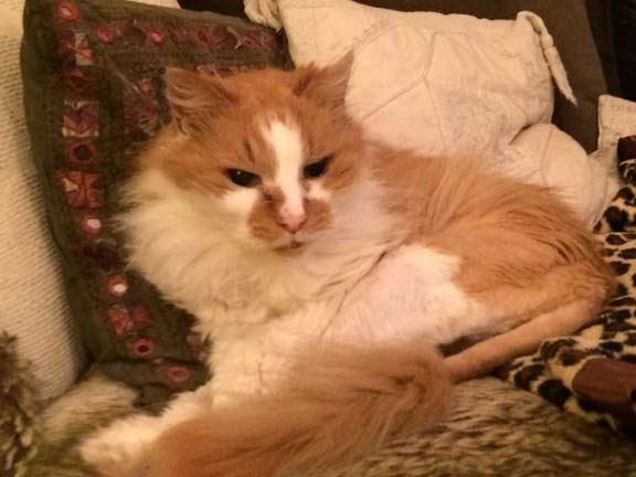 mobile cat groomer Chelsea