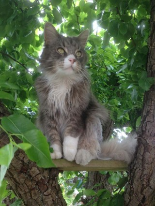wimbledon mobile cat groomer
