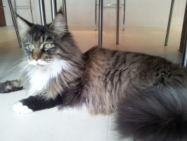 mobile cat groomer Teddington