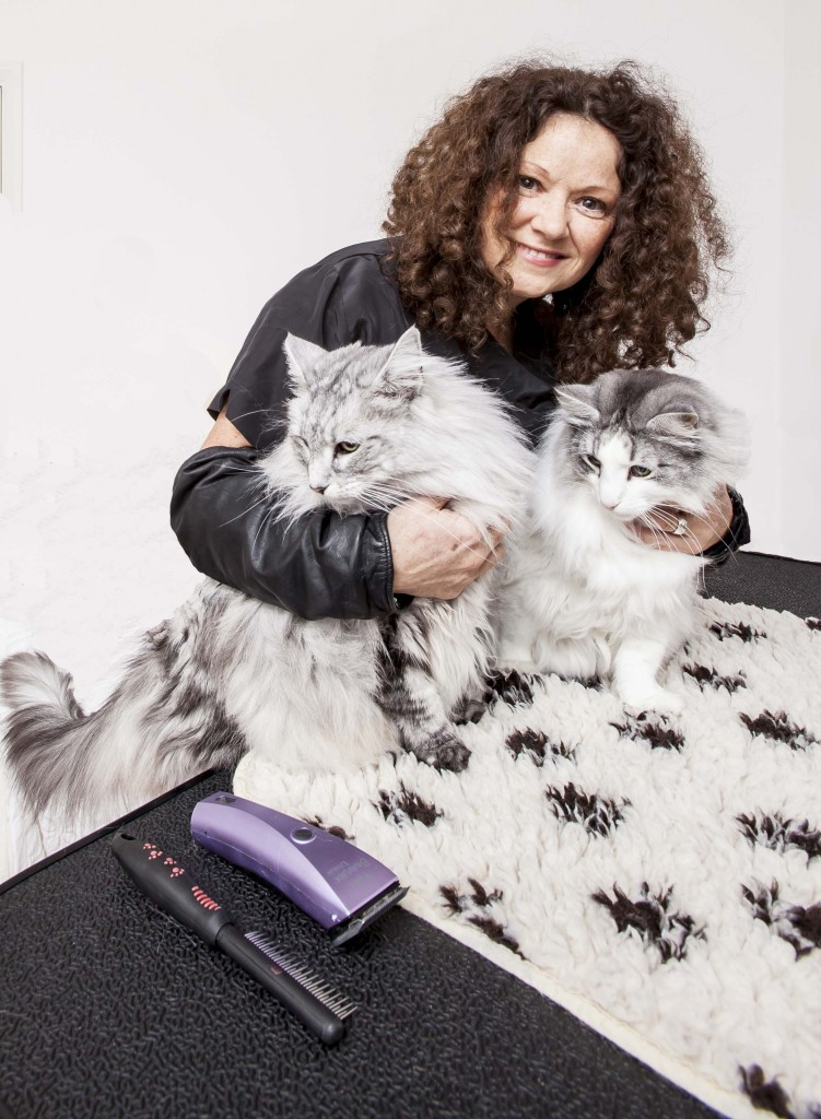 mobile cat groomer South London