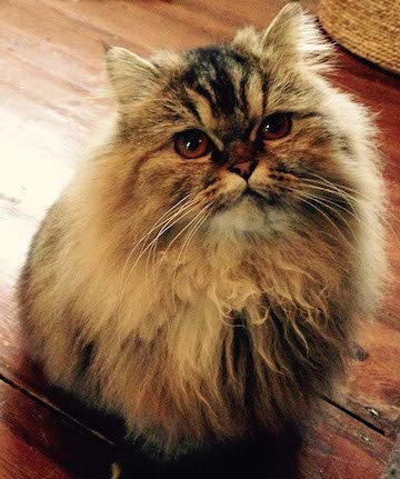 cat sitter W11