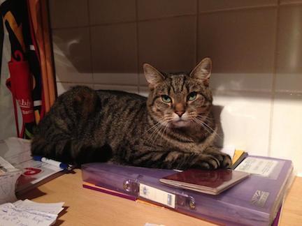 vet referred cat behaviour consultant