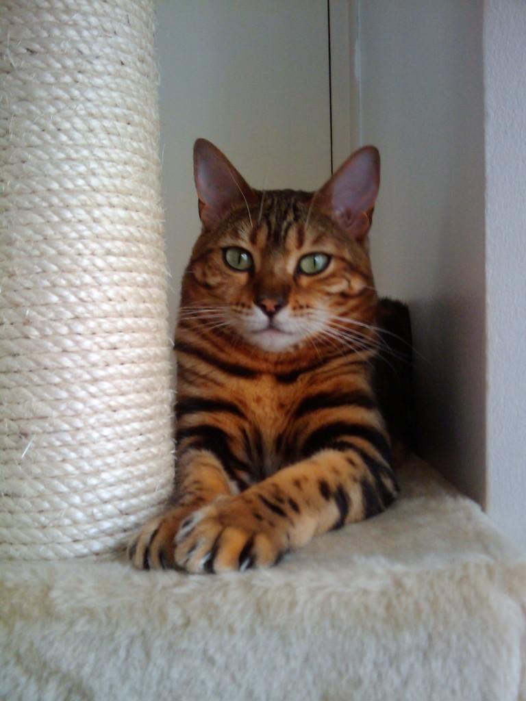 Ladbroke-Grove-cat-sitter