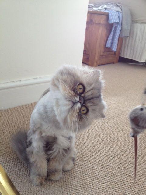 Maida-Vale-cat-sitter