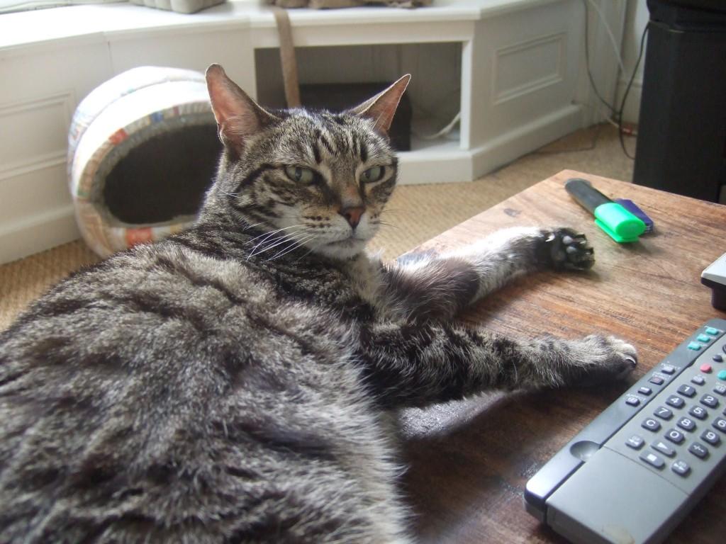 W10-cat-sitter