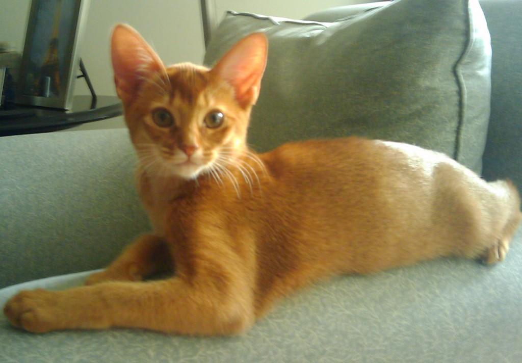 cat-sitter-Holland-Park
