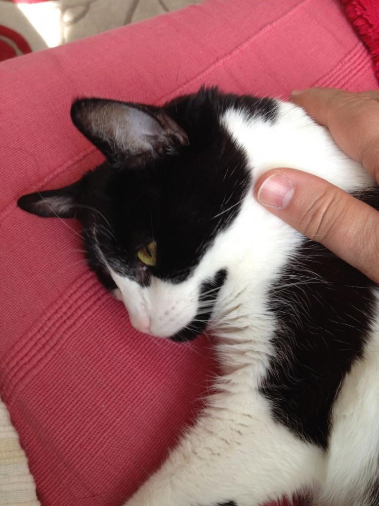 pet-sitter-Notting-Hill